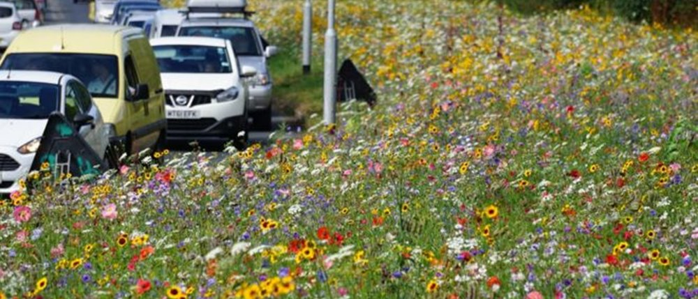Why are England's roadsides blooming?